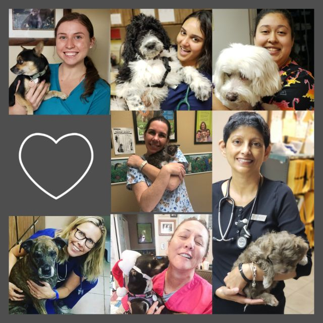 Sugarloaf Animal Clinic - Veterinarian in Phoenix, AZ