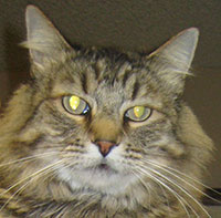 senior cat wellness packages phoenix veterinarian